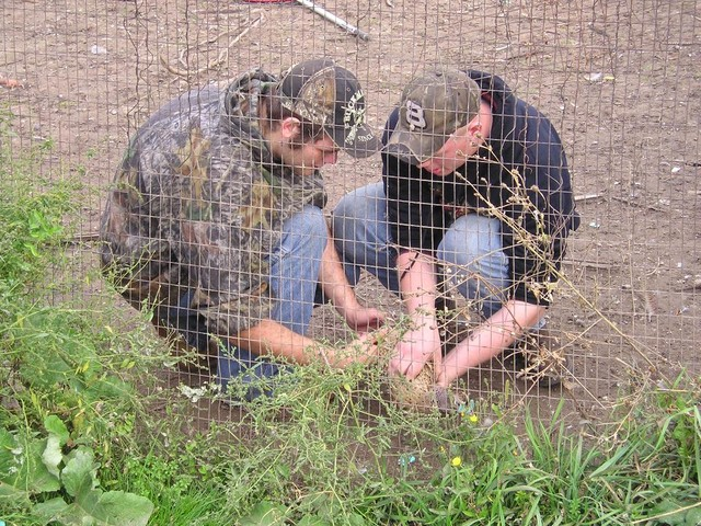 1-pheasants-2008