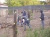4-pheasants-2008